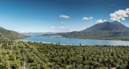 Making The Case for Guatemalan Coffee