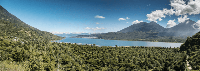A coffee farm in the Traditional Atitlan region