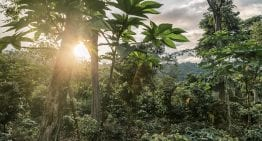 Shade Grown Coffee: The Movie Asking About Sustainability