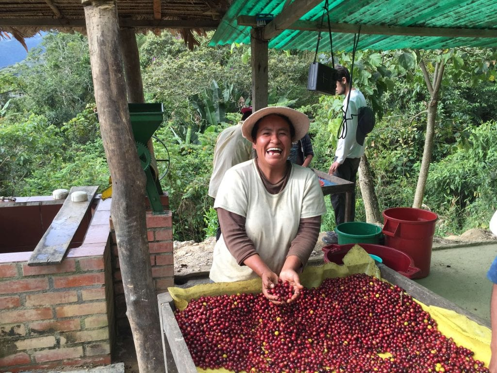 Smiling producer processing cherries