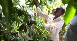 VIDEO Guide: What Does a Kenyan Agricultural Officer Do?