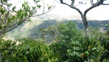 Mejor de Nariño: A Specialty Coffee Auction Comes to Nariño, Colombia