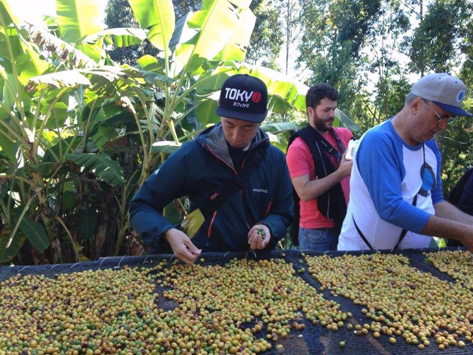 Tetsu picking out green cherries on Sandrinho's farm, Tres Barras.