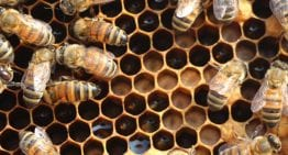 How Coffee Farmers Can Keep Bees: A VIDEO Guide