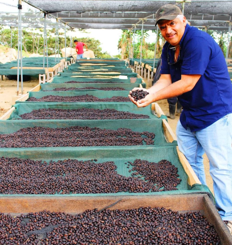 Gilberto Baraonas with coffee being natural/dry processed under shade