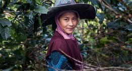 Is Fairtrade the Answer to Gender Inequality in Java?