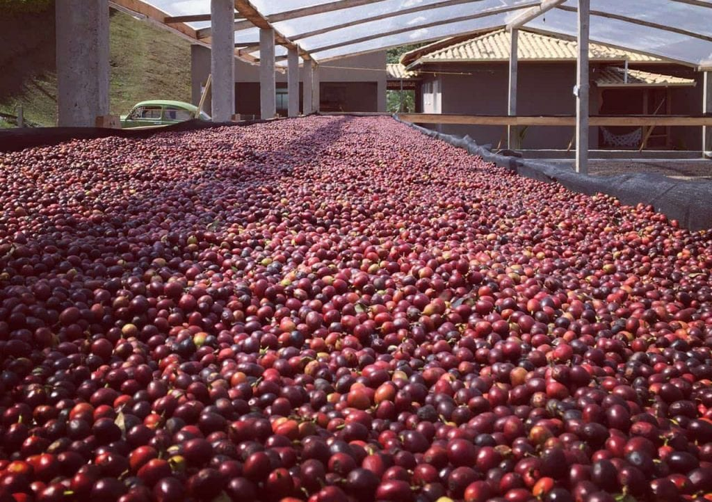 Cherries on African beds