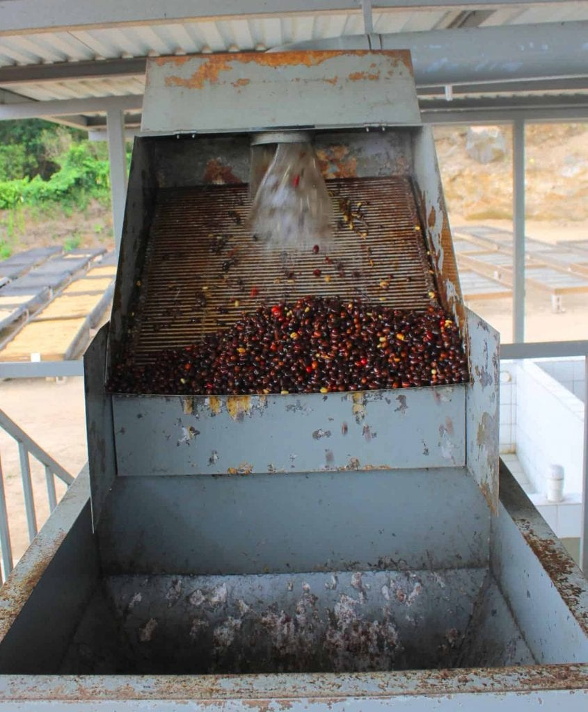 Mucilage being removed by machine