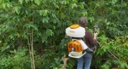 A VIDEO Guide to Combating La Broca, the Coffee Berry Borer