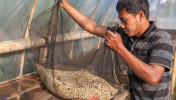 Indonesian Specialty Coffee: The Challenges & Opportunities