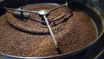 Omni Roast: Is There One Roast to Rule Them All?
