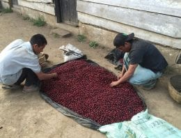 Producer Opinion: Why I Always Want to Learn More About Coffee