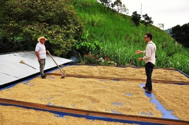 coffee drying patio