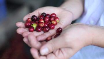 VIDEO: Introducing La Prosperidad de Chirinos, a Peruvian Cooperative
