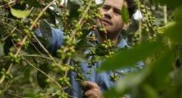 De la Semilla a la Taza: 5 Formas en las Que el Café Mexicano se está Volviendo de Especialidad