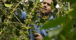 Seed to Cup: 5 Ways Mexican Coffee Is Becoming Specialty