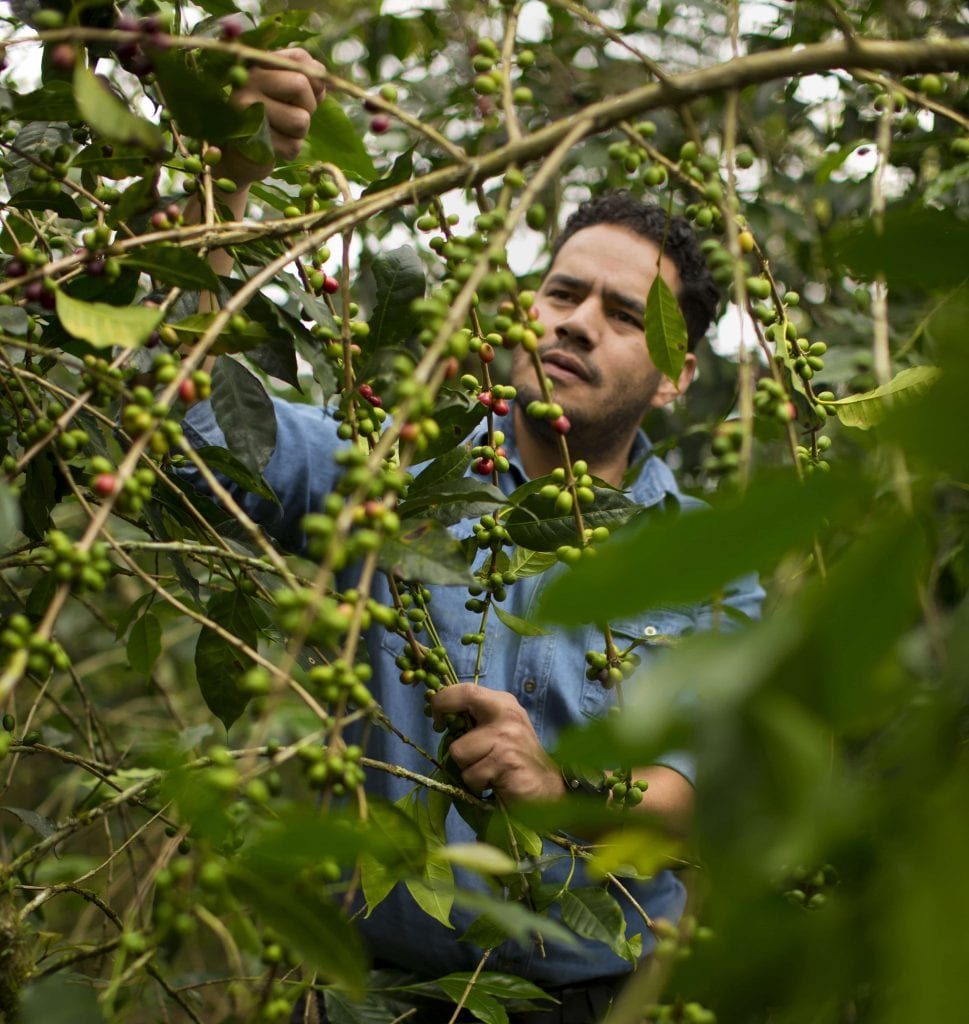 Jesus Salazar on a coffee farm