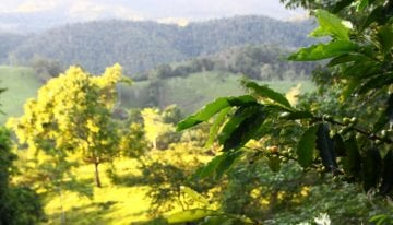 How Colombia's Natural Diversity Protects Against Coffee Pests