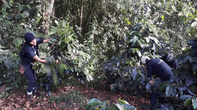 Reforestation of Ecuador's