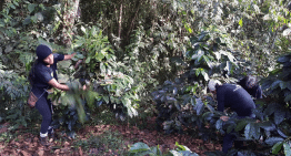 Can Coffee Farms Support Reforestation in Ecuador?