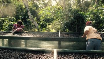 Coffee Processing: How to Build African Raised Beds