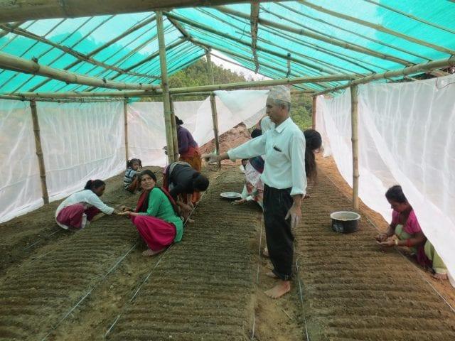 Pokhara plant coffee seeds