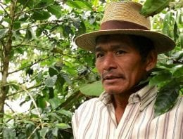 How the Ixil Guatemalans Are Fighting La Roya Organically