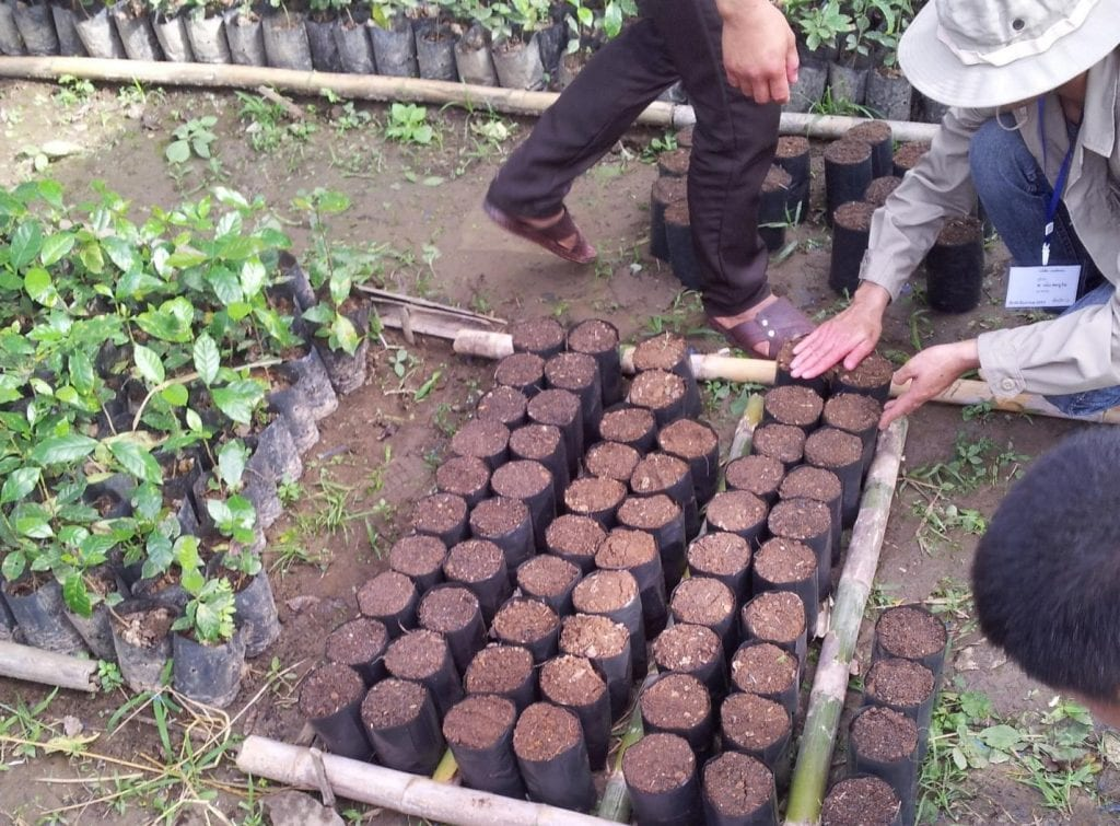 Training farmers on coffee seedlings