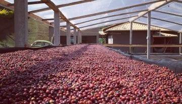 Natural Lento: Cómo Llegó La Fermentación Controlada a Brasil