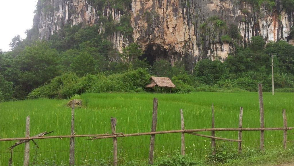 Lao rice paddy