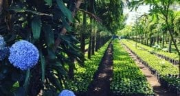 Producer Insight: Organic Coffee Farming in Guatemala