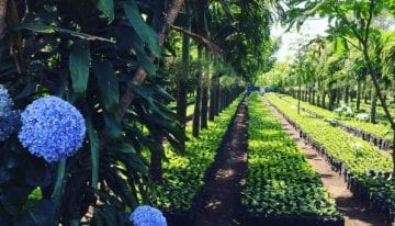 Producer Insight: Organic Coffee Farming in Guatemala