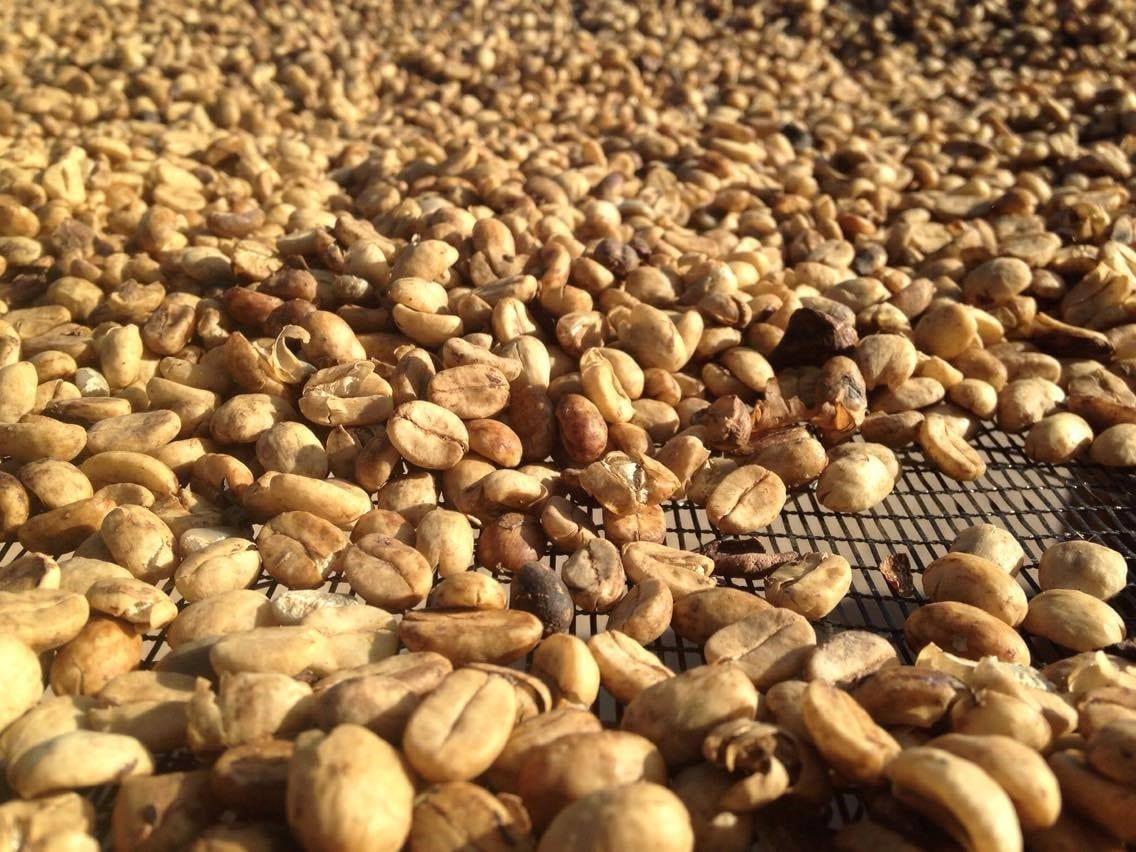 drying-coffee-2