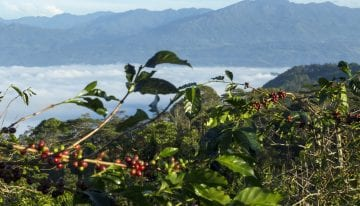 How Indonesian Specialty Farmers Combat a Challenging Climate