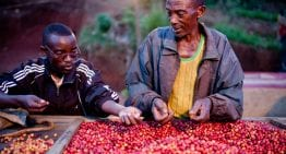 Can Education Keep Youths in Coffee?
