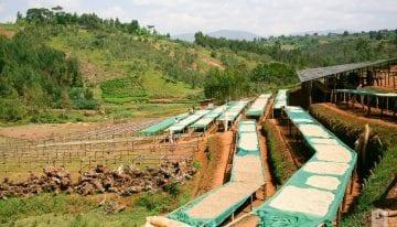 ¿Es el Café la Respuesta a la Pobreza Extrema de Burundi?