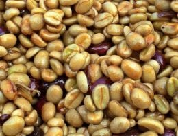 Why a Salvadoran Mill Believes in Relationship Coffee