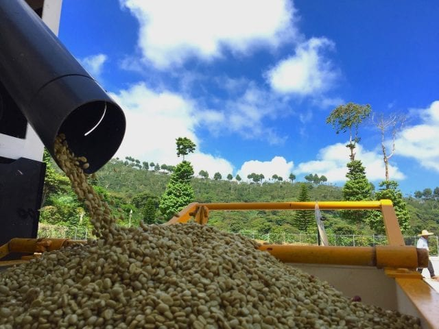 processing coffee