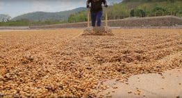 VIDEO: From Planting to Roasting in El Salvador