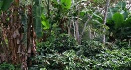 Cómo la Diversidad Natural de Colombia es una Protección Contra las Plagas