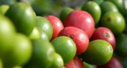 De Café Comercial a Café de Especialidad: Una Historia de Éxito