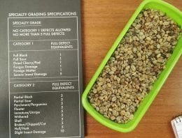 7 Green Bean Defects Roasters & Producers Need to Recognise