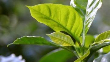 Producer Insight: Is Organic Coffee Farming Worth the Risk?