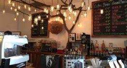 Recorrido por Cafés de Especialidad en San Salvador, El Salvador