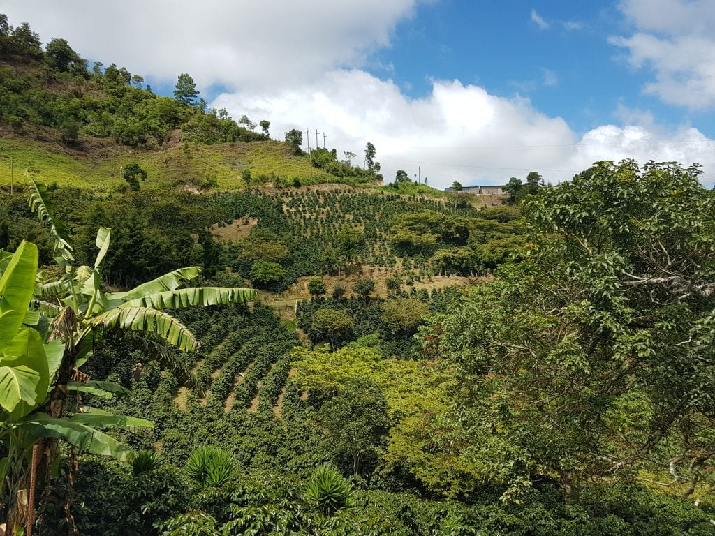 Coffee farm in Guisayote Honduras