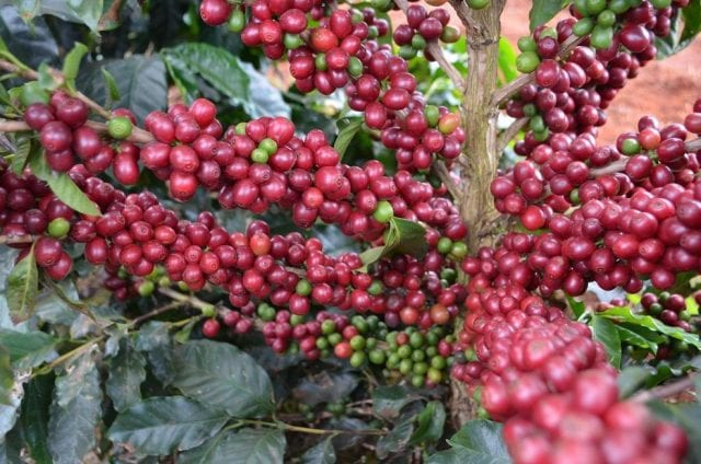 african coffees