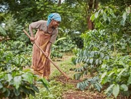Coffee Regions 101: What Sets East Africa Apart?