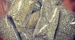 Perspectiva del Comprador: Cómo Hacer Frente a Los Defectos de Café en Verde