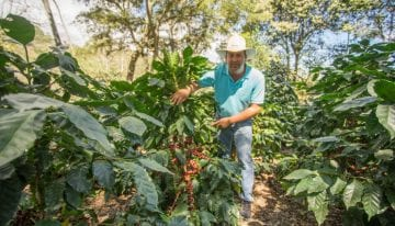 Origen San Marcos: What Are the Coffee Profiles of West Honduras?
