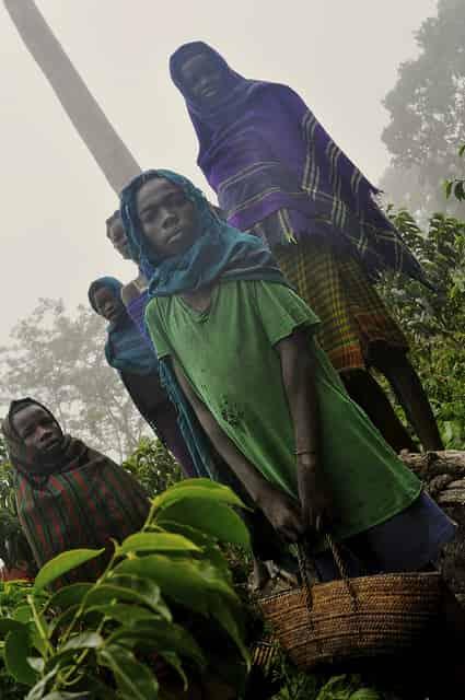 comunidad de cafe en Africa